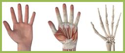 Kézműtét